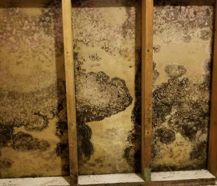 Commercial What Is Mold and Why Does It Smell Musty?