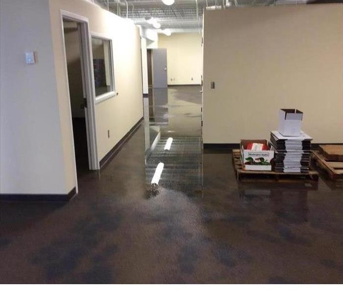 Commercial Quick Guide to Mold Damage After Flooding