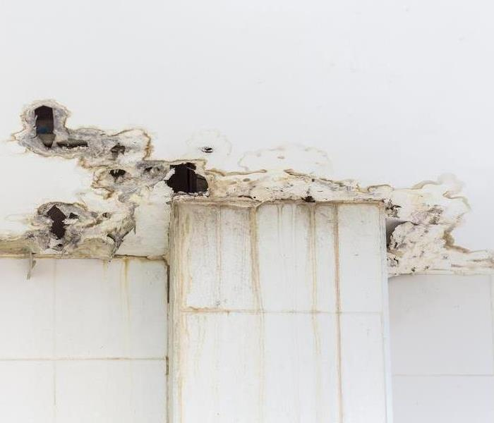 Mold Remediation Combatting Mold: The Best Purifiers for Mold Reduction