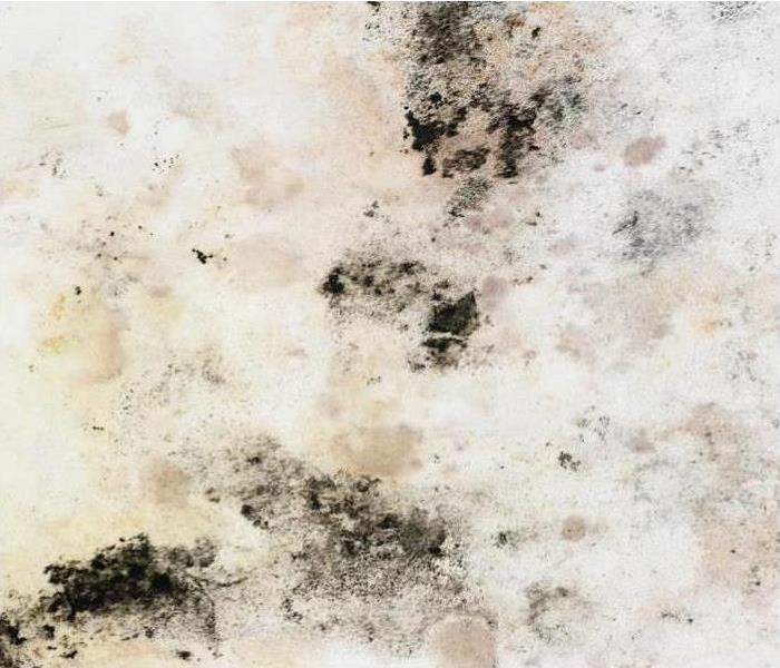 Mold Remediation Mold Damage Remediation and Restoration in Atlanta